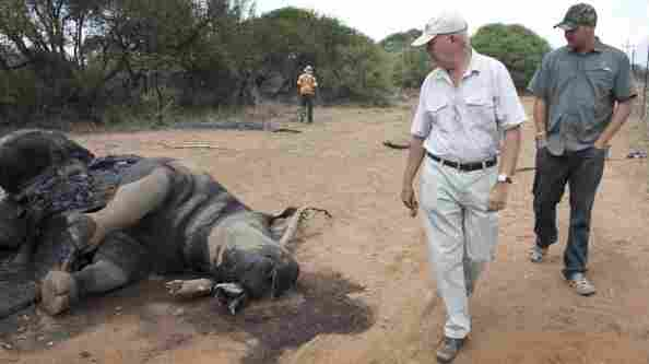Miles Lappeman (left) and his son Marc with the carcass of a rhino that was killed for its horn at their Finfoot Lake Reserve on Nov. 24 in South Africa. This was one of eight rhinos slaughtered by poachers.