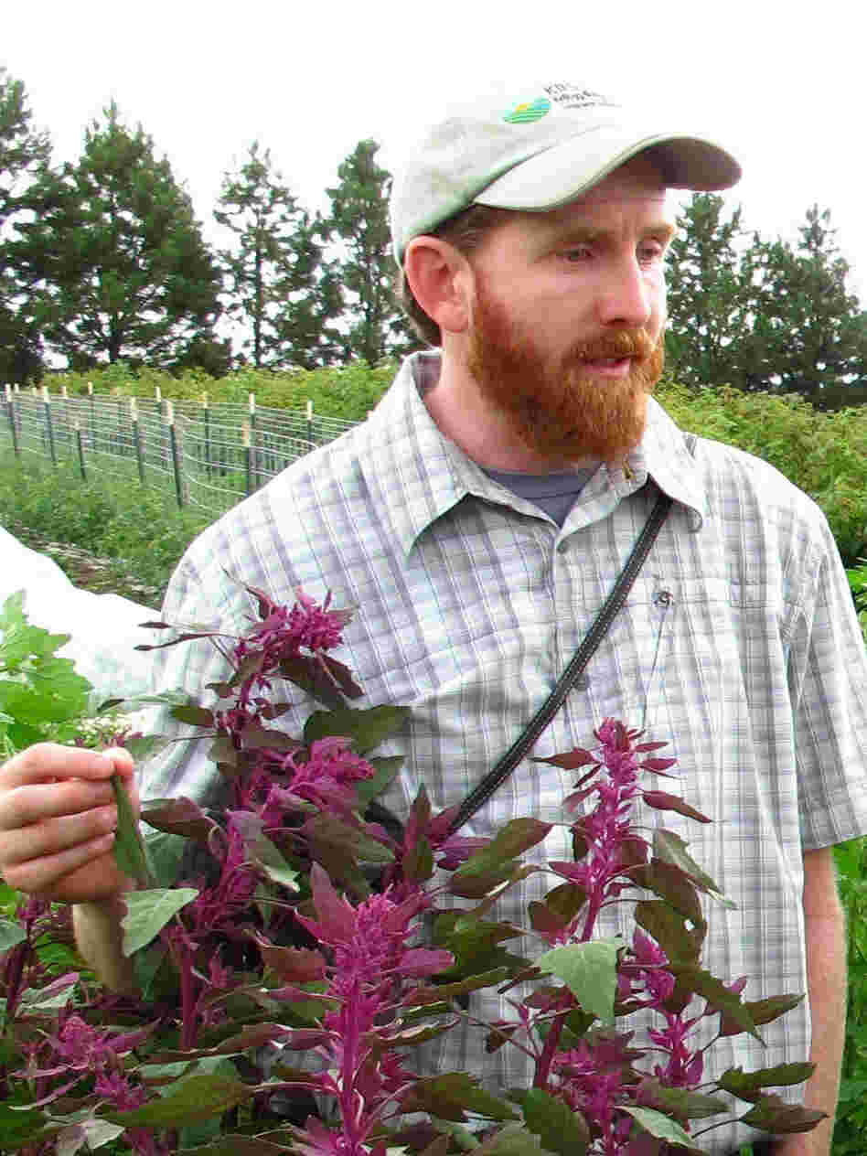 Gardiner Kevin Murphy with a goosefoot plant, the seeds of which we eat as quinoa.