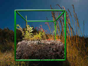 Sifting through samples within the cube, photographer David Littschwager counted 90 separate species, including 25 types of plants just on the soil surface, along with some 200 seeds representing at least five of those species.