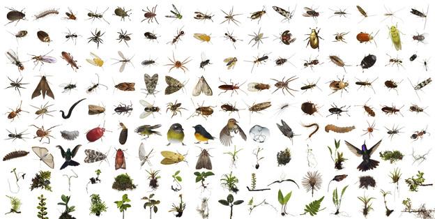 Böcek İlaçlama Şirketleri Uğur Mumcu