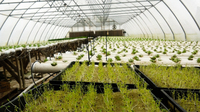 There's a greenhouse boom around the country, thanks in part to the