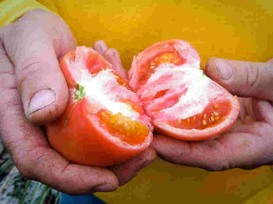 The taste of Mock's tomatoes starts with the seed. He uses only organic varieties, including cherry and several heirloom varieties.