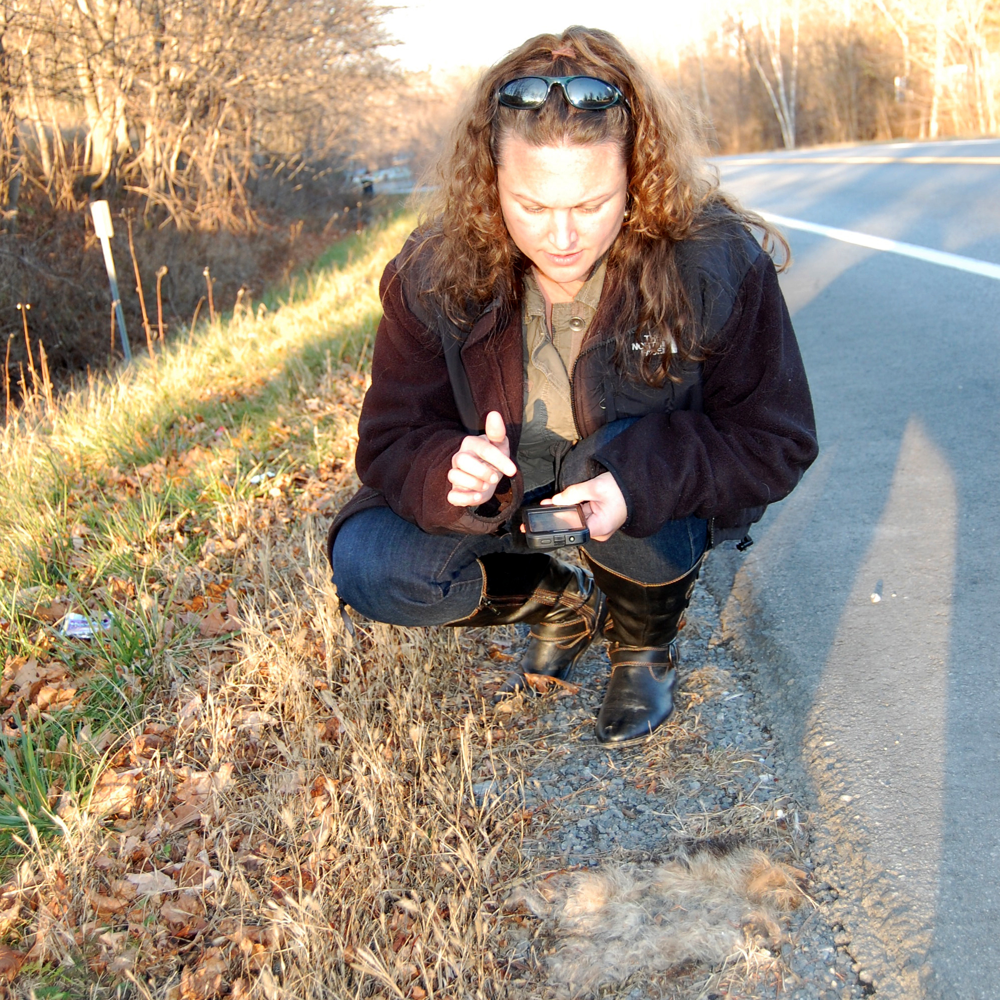 Danielle Garneau, wildlife ecologist with the State University of New York at Plattsburgh, uploads data about roadkill onto her smartphone.
