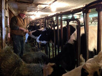 Dairy farmer Bob Andrews feeds heifers in the same barn his grandfather used. He says today