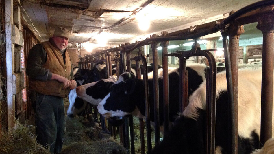 "Dairy farmer Bob Andrews feeds heifers in the same barn his grandfather used. He says today ""the harder you work, the further you get behind."" (NCPR)"