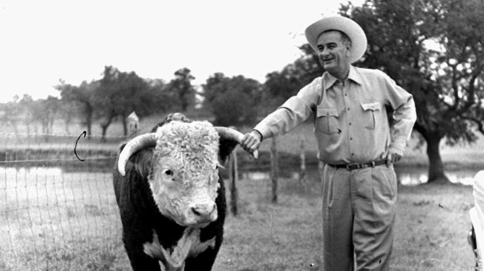 Lyndon Johnson, then the vice president-elect, with a prize-winning Hereford bull on his ranch near Johnson City, Texas, in 1960. Linguists say the twang that has long been synonymous with Texans is fading. (AP)