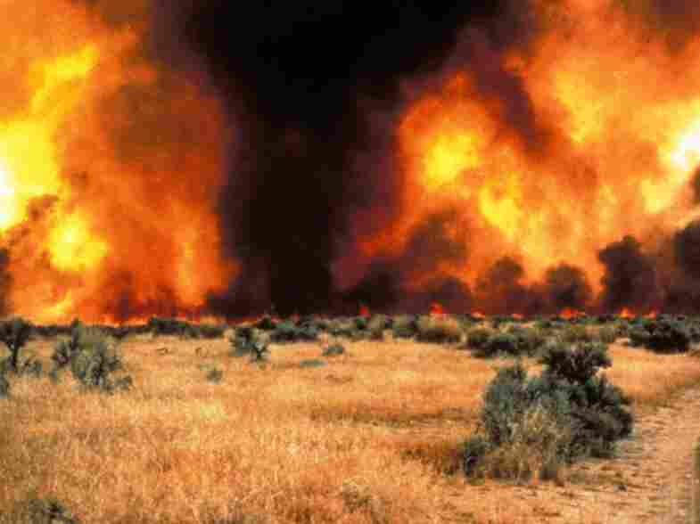 Between sagebrush, a continuous cover of cheatgrass fuels an intense fire in the Great Basin.