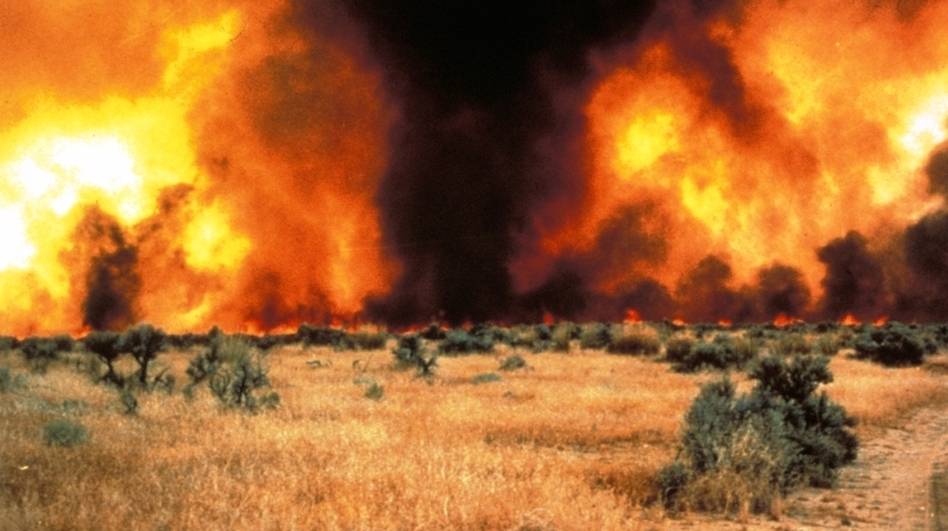 Between sagebrush, a continuous cover of cheatgrass fuels an intense fire in the Great Basin. (Courtesy of Mike Pellant, Bureau of Land Management)