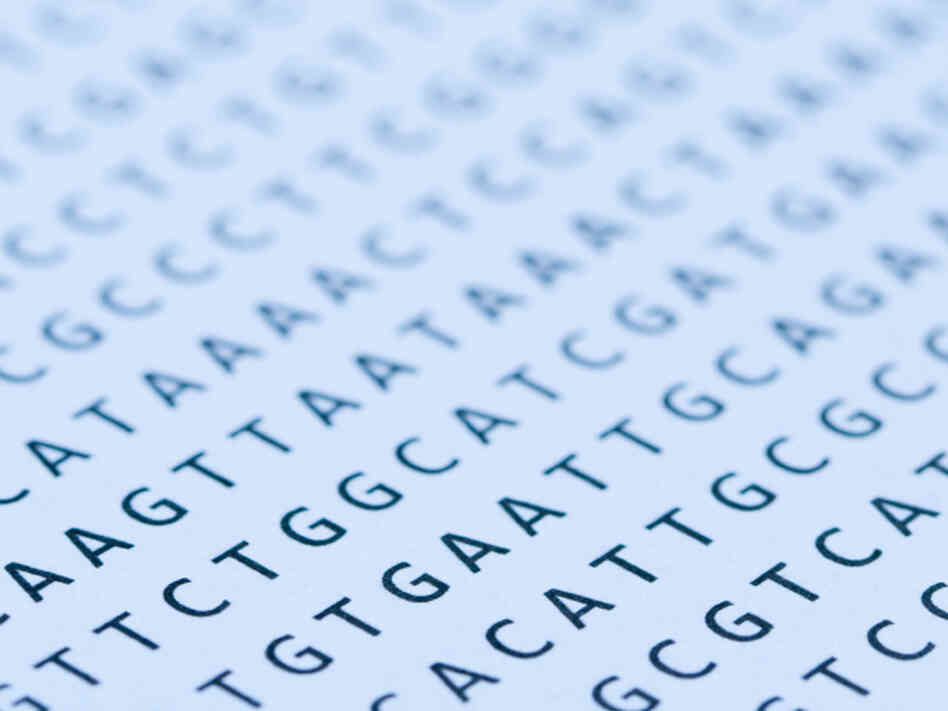 When researchers looked at the genetic sequences of 179 individuals, they found far more de