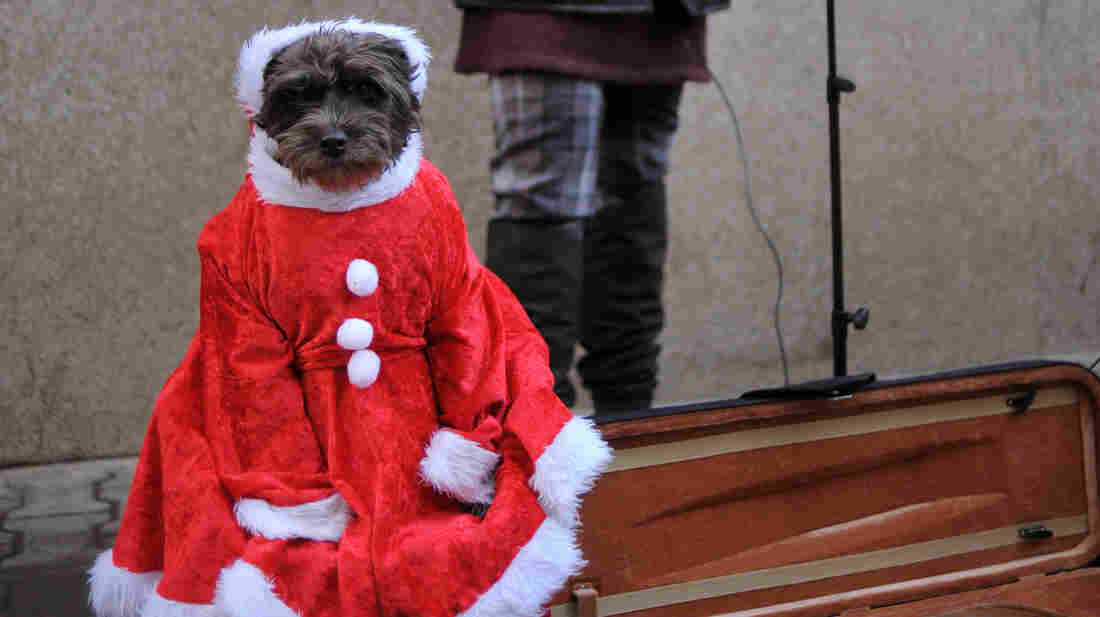 Someone took this Santa's violin.