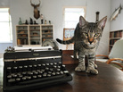 """Hairy Truman,"" one of the six-toed cats at the Ernest Hemingway Home and Museum in Key West, Fla."