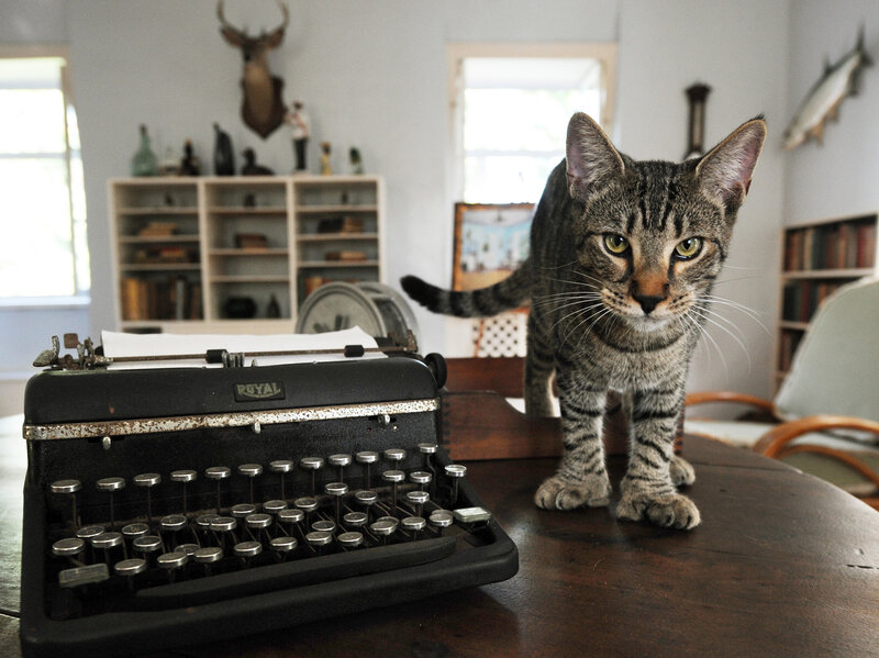 The Feds Can Tell Ernest Hemingway S Cats What To Do Here S Why