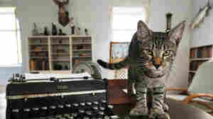 The Feds Can Tell Ernest Hemingway's Cats What To Do; Here's Why