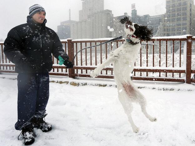 This dog likes snow: In Minneapolis on Sunday, Ada