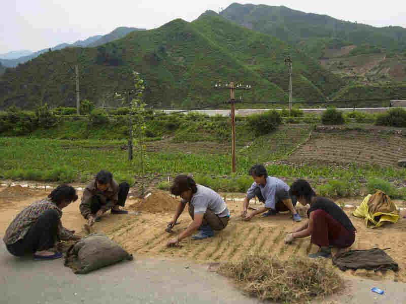 North Korean women work on a roadside in North Pyongan province, North Korea, in June. North Korea increased its staple foods production for the second year in a row, but its citizens are still suffering from a serious lack of key proteins and fats in their diets, a U.N. report says.