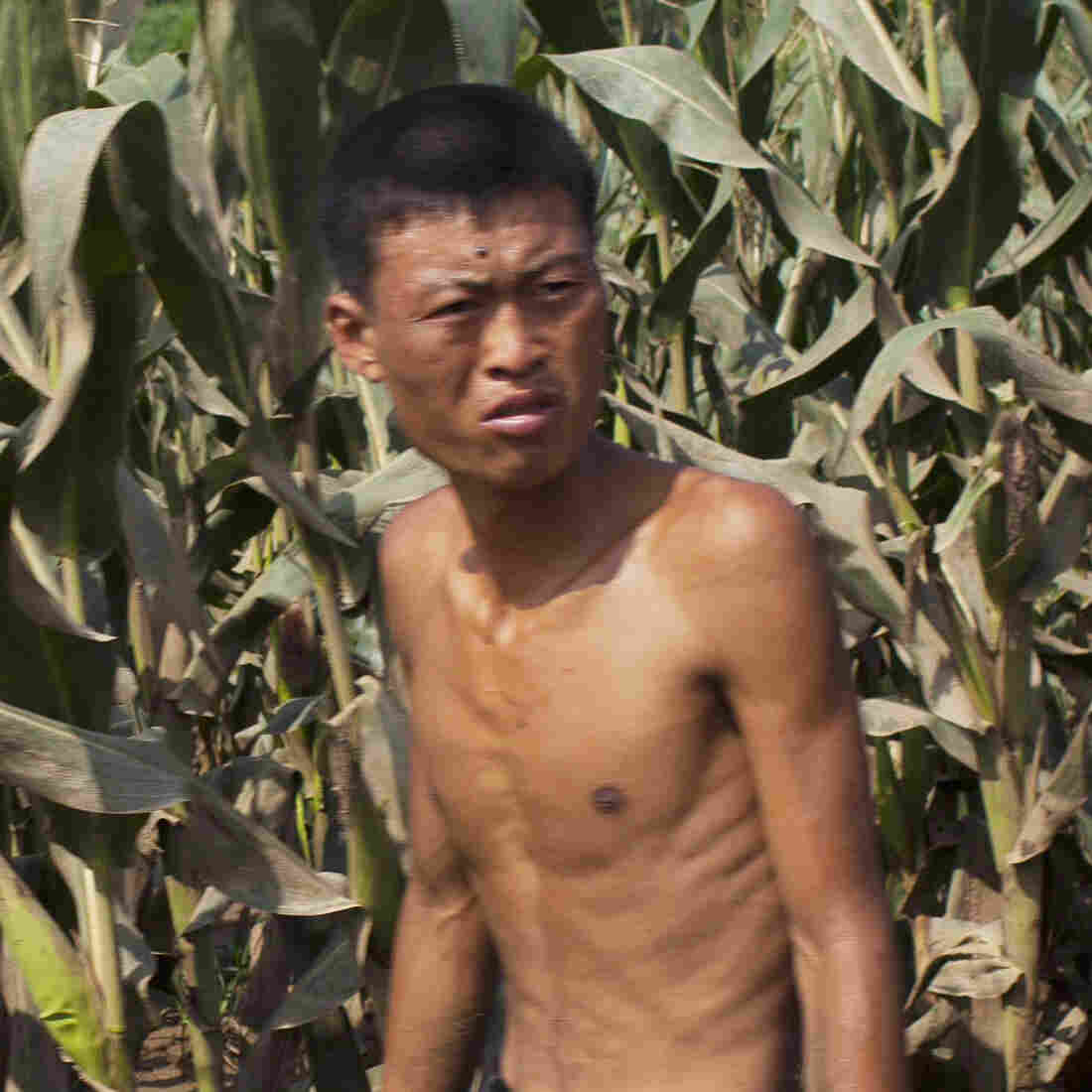 Hunger Still Haunts North Korea, Citizens Say