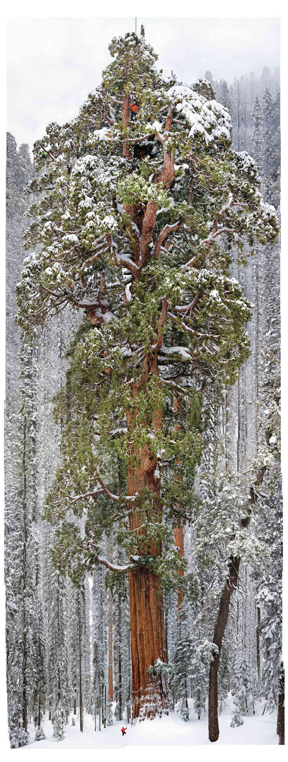 Cloaked in the snows of California's Sierra Nevada, the 3,200-year-