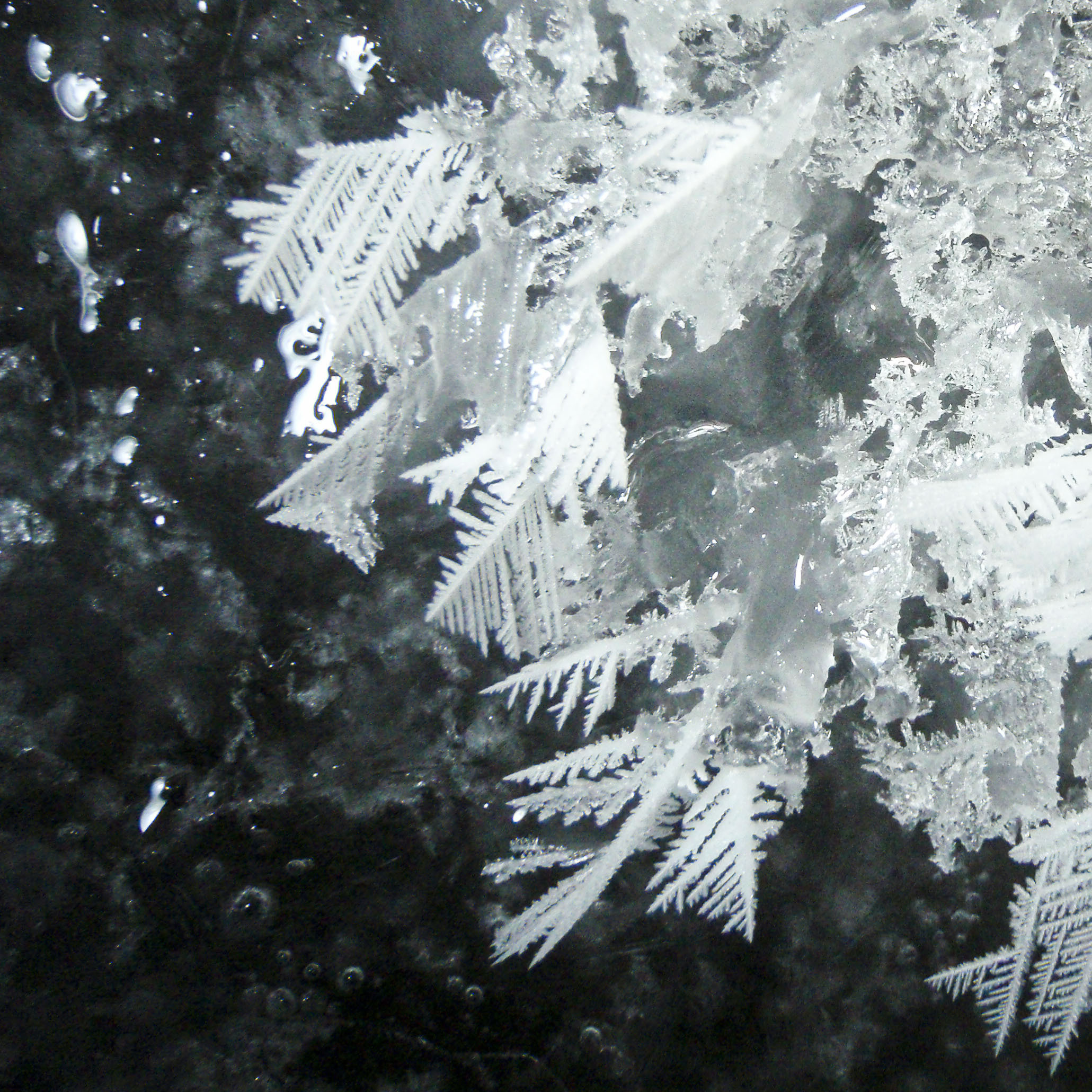 Frost flowers grown in a lab.
