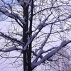 wintry-tree