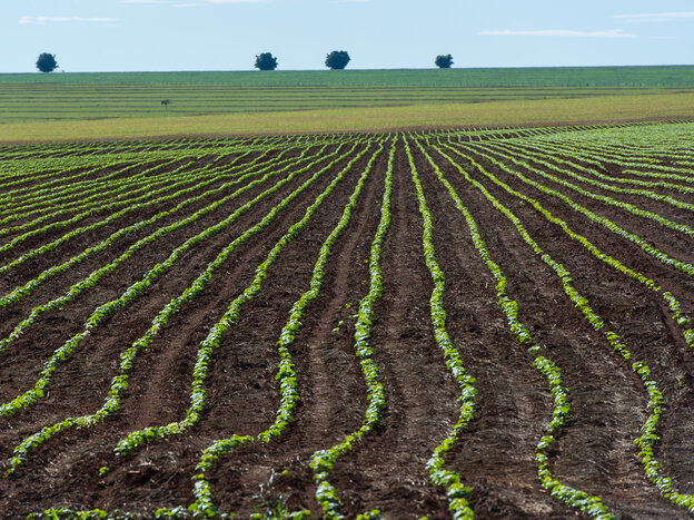 A soybean field near Campo Verde in western Brazil in January 2011. Researchers argue that enough arable land is already under cultivation to feed the planet for the