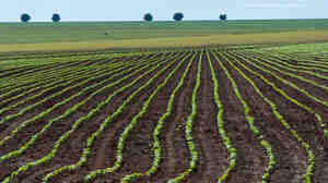 A soybean field near Campo Verde in western Brazil in January 2011. Researchers argue that enough arable land is already