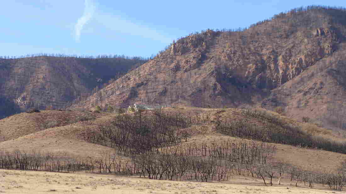 "Janet Wilson describes the charred hillsides above her old home as ""a vast area of toothpicks."" She found the scene too sad to return to."