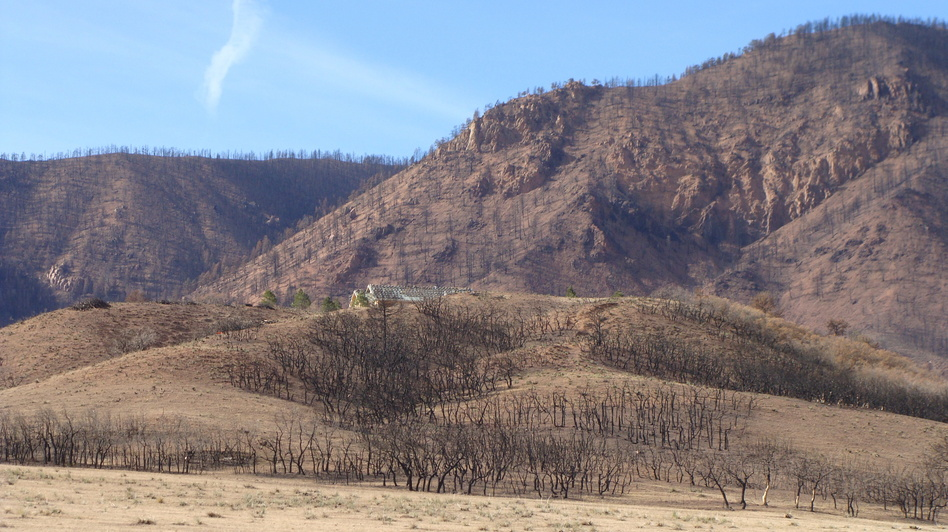 "Janet Wilson describes the charred hillsides above her old home as ""a vast area of toothpicks."" She found the scene too sad to return to. (Megan Verlee for NPR)"