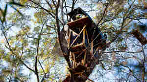 David Daniel, an east Texas landowner, was so determined to block the Keystone XL pipeline from coming through his forest that he took to his trees and built an elaborate network of treehouses eight stories above the ground.