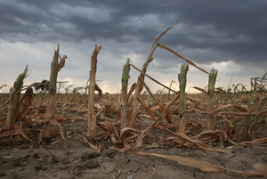 Rain clouds move over the remnants of parched cornstalks on Aug. 22 near Wiley, Colo. A summer storm came too late to help farmers whose crops were decimated in the wide zone of exceptional drought in Colorado's eastern plains.