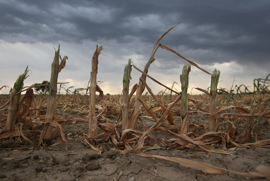 Rain clouds move over the remnants of parched cornstalks on Aug. 22 near Wiley, Colo. A summer storm came too late to help farmers whose crops were decimated in the wide zone of exceptional drought in Colorado's eastern plains. (Getty Images)