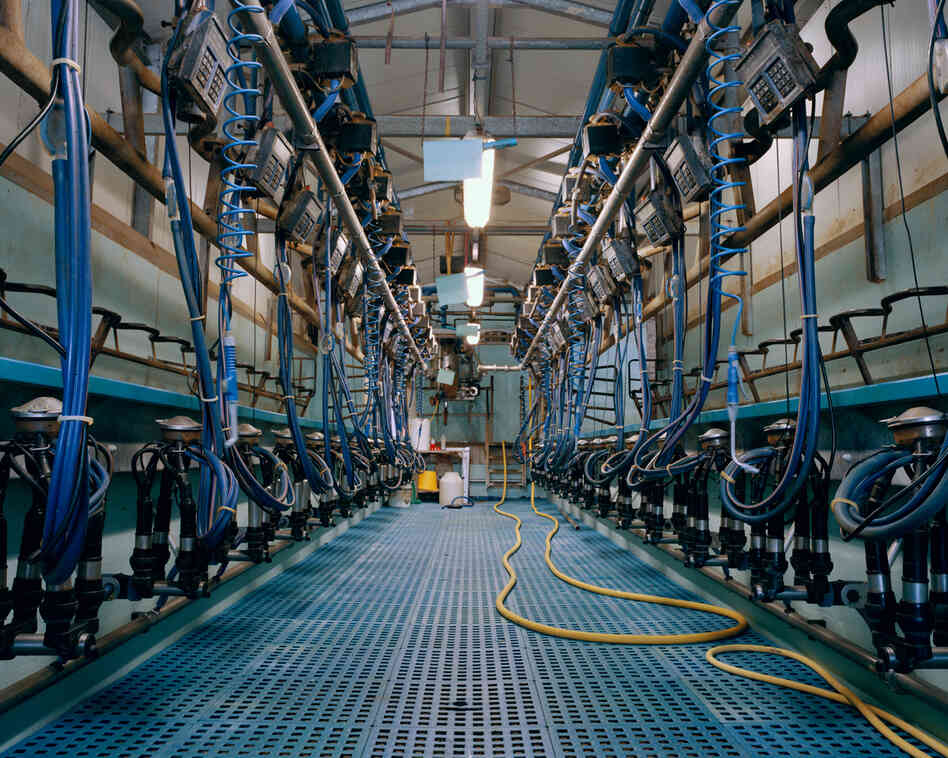 Milking Parlor, 2012: Two people are needed to milk twice a day, 300 cows.