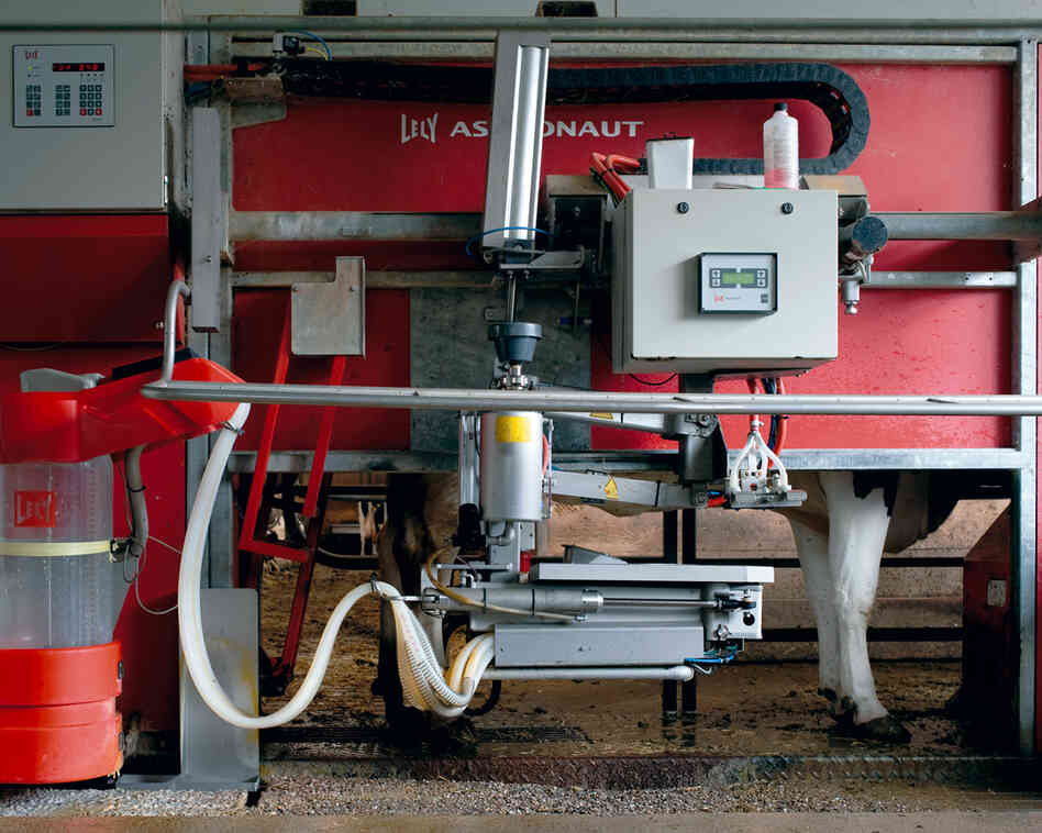 Milking Robot I, 2012: One milking robot milks three times per day, 60 cows. The cows are in a stable, in which they can move around freely. They can use the robot whenever they need to. No human needs to be present.
