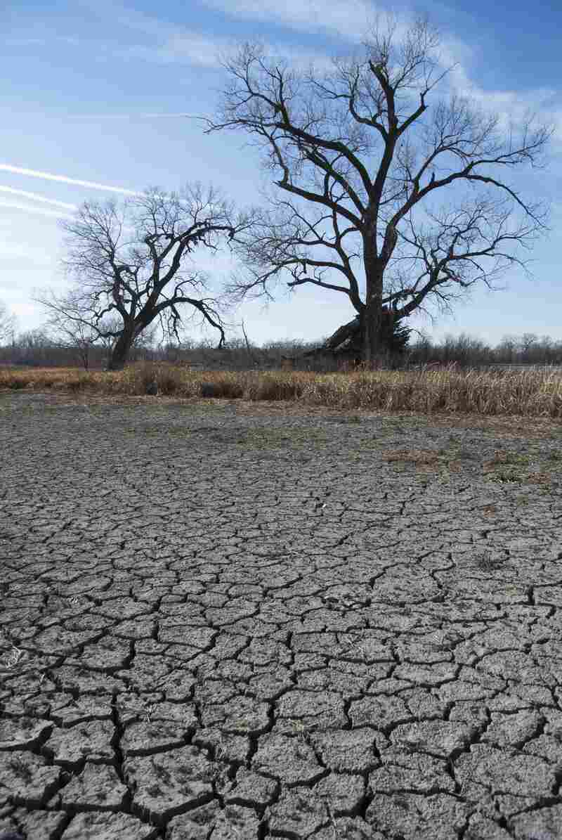 Cracks form in the bed of a dried lake in Waterloo, Neb. The drought withered crops and dried out lakes across the nation's midsection in 2012.