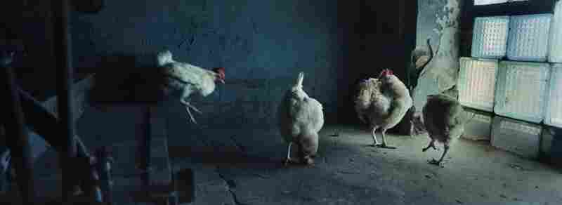 Chickens stroll around the abandoned military barracks where the Sokolov family lives.