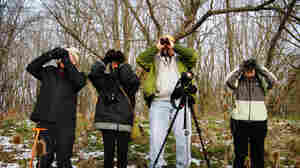 From Canada To Latin America, The Christmas Bird Count Is On
