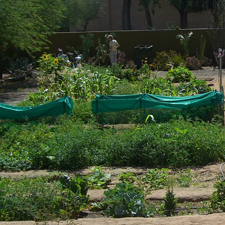 A community garden made use of the flowers left at memorials for victims a shooting in Tucson, Ariz.
