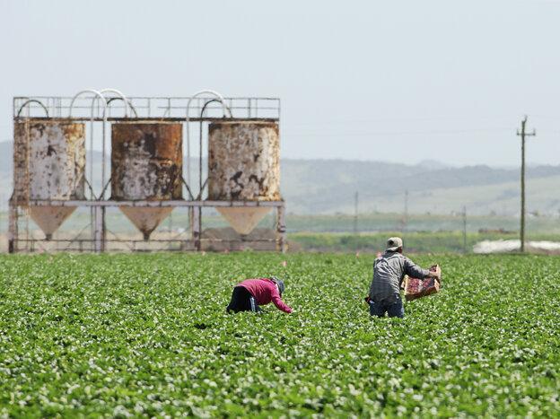 Farmworkers like
