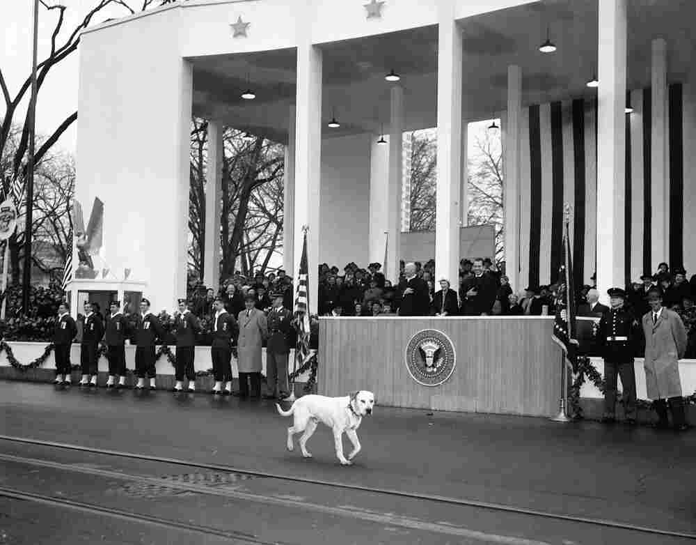 Vice President Richard Nixon laughed as a stray dog joined the parade.