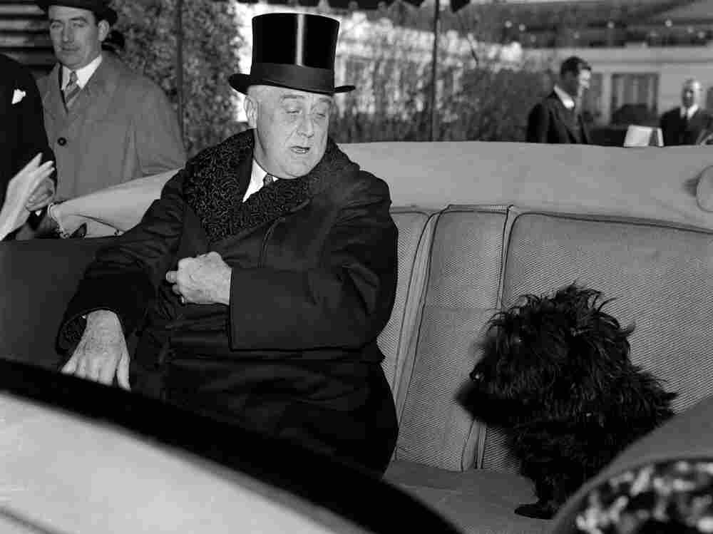 """It's hard to blame Fala the Scottie pup for jumping into President Franklin Delano Roosevelt's car as he headed to Capitol Hill for his third inauguration in 1941. What dog doesn't like to go for a ride? The original caption says Fala is """"looking disconcerted as the President informs him that there is no place for little dogs in such momentous affairs."""""""