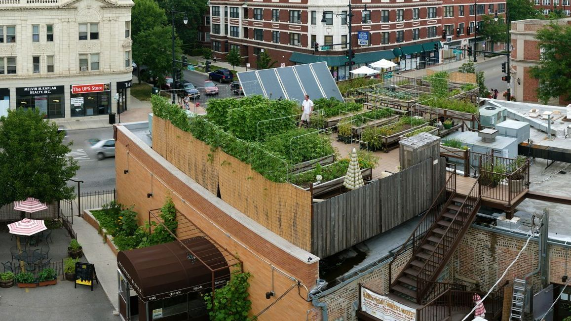 """Uncommon Ground, a <a href=""""http://www.uncommonground.com/pages/organic_roof_top_farm_home/200.php"""">certified green</a> restaurant in Chicago, hosts an organic farm on its rooftop."""