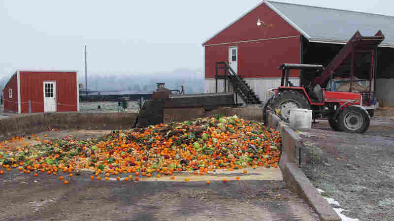 The butter sculpture will be dumped into this pit of rotting fruit and vegetables on the Reinford family's farm. Then, all that food will get ground up and put into the farm's methane digester.