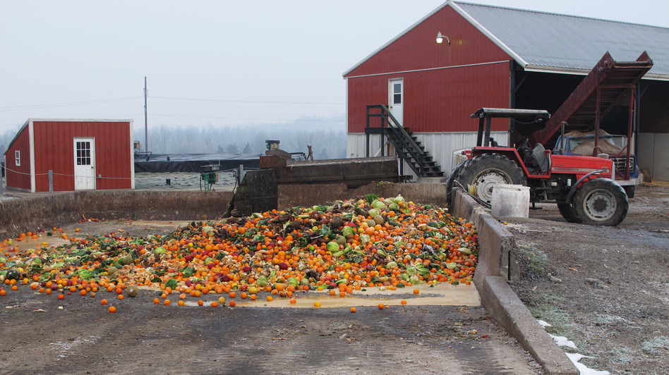 The butter sculpture will be dumped into this pit of rotting fruit and vegetables on the Reinford family's farm. Then, all that food will get ground up and put into the farm's methane digester. (NPR)