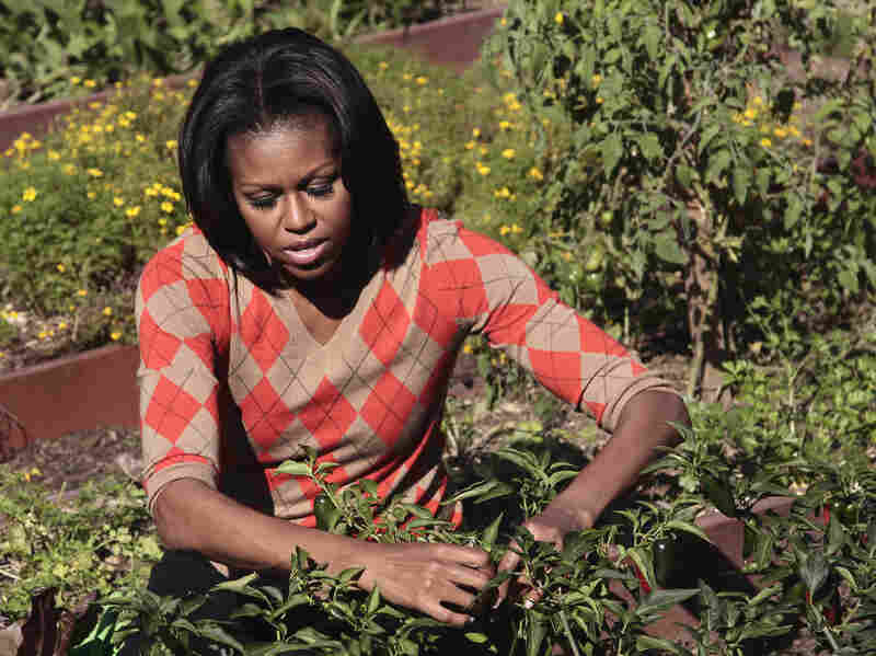 First lady Michelle Obama tends to the presidential garden during the third annual White House kitchen garden fall harvest in October 2011. The last vegetable garden planted at the White House was Eleanor Roosevelt's victory garden. Photo: Pablo Martinez Monsivais/AP