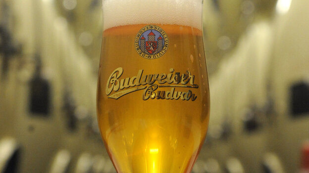 A glass of Czech Budweiser beer is seen at the the Budejovicky Budvar brewery in southern Bohemia. Britain's highest court has ruled t