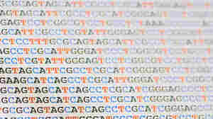 Each strand of DNA is written in a simple language composed of four letters: A, T, C and G. Your code is unique and could be used to find you.