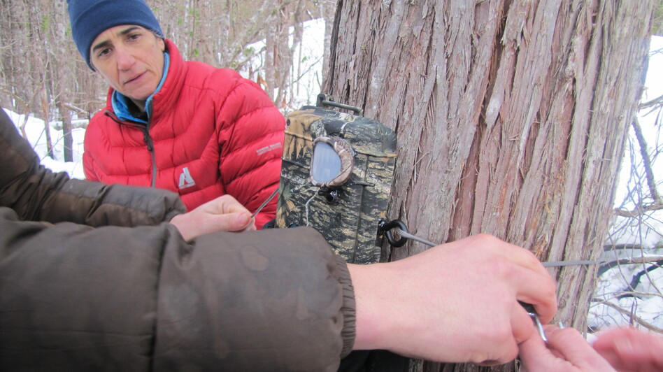Volunteers with Adventurers and Scientists for Conservation set up motion-activated cameras in remote parts of Olympic National Forest in search of the American Marten. (Courtesy of Michael Murray)