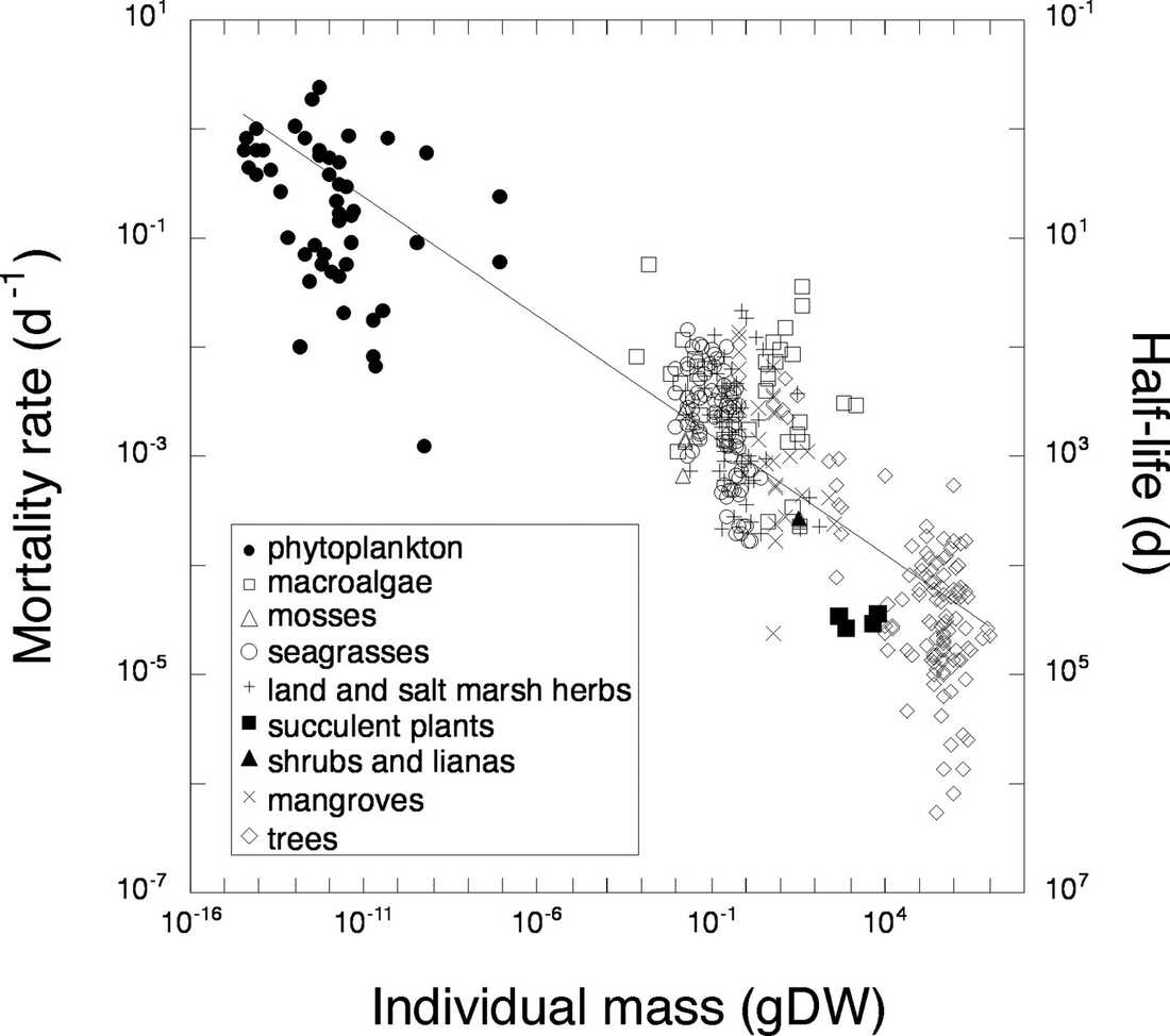 The relationship between plant mortality rate (D) and the individual mass (M) of plants ranging across phytoplankton, macroalgae, mosses, seagrasses, land and salt marsh herbs, succulent plants, shrubs, lianas, mangroves, and trees. The corresponding half-life is also indicated in the plot. gDW, grams dry weight.