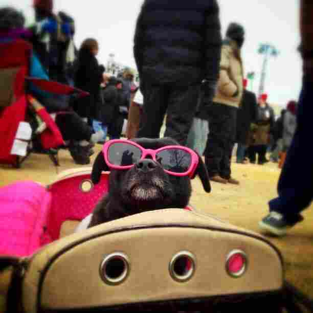 Photojournalist John Poole shared this photo on the NPR Instagram feed of this stylish pup named Juicy, who braved the cold weather and crowds to watch the inaugural ceremony from the National Mall.