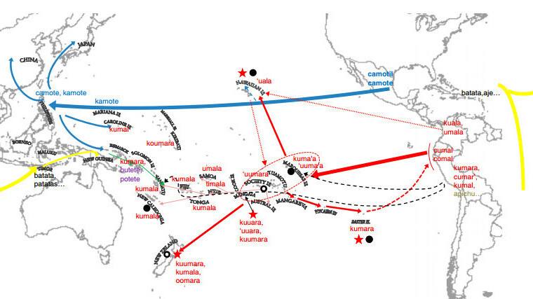 How The Sweet Potato Crossed The Pacific Way Before The Europeans - Polynesian migration map oceania