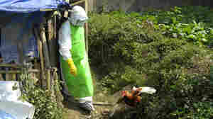 Scientists Put An End To Moratorium On Bird Flu Research